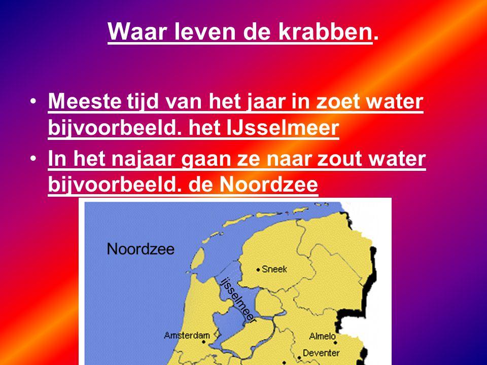 Waar leven de krabben. Meeste tijd van het jaar in zoet water bijvoorbeeld. het IJsselmeer.