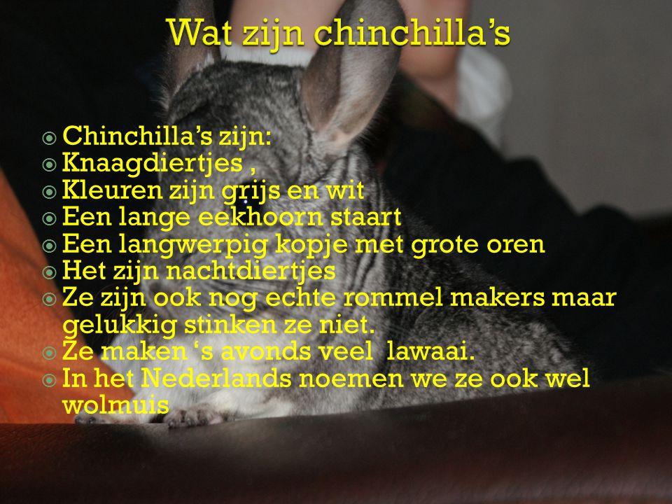 Wat zijn chinchilla's Chinchilla's zijn: Knaagdiertjes ,