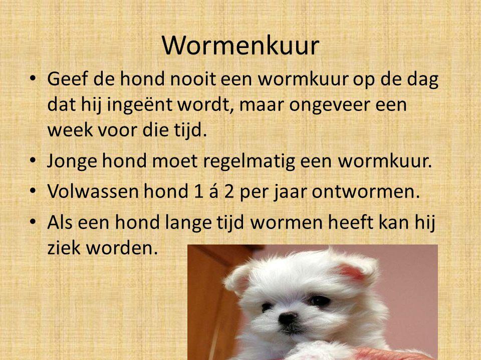 Wormenkuur Geef de hond nooit een wormkuur op de dag dat hij ingeënt wordt, maar ongeveer een week voor die tijd.