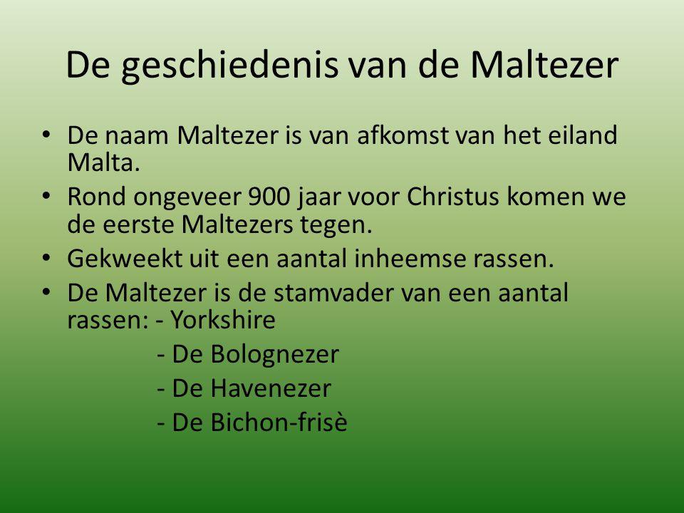 De geschiedenis van de Maltezer