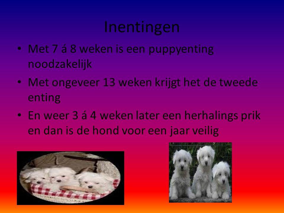 Inentingen Met 7 á 8 weken is een puppyenting noodzakelijk
