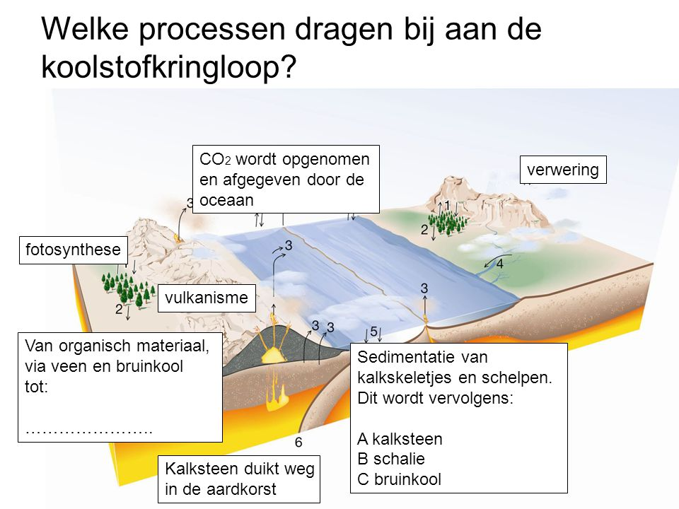 Welke processen dragen bij aan de koolstofkringloop