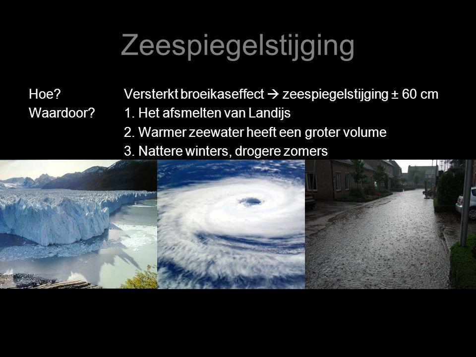 Zeespiegelstijging Hoe Versterkt broeikaseffect  zeespiegelstijging ± 60 cm. Waardoor 1. Het afsmelten van Landijs.