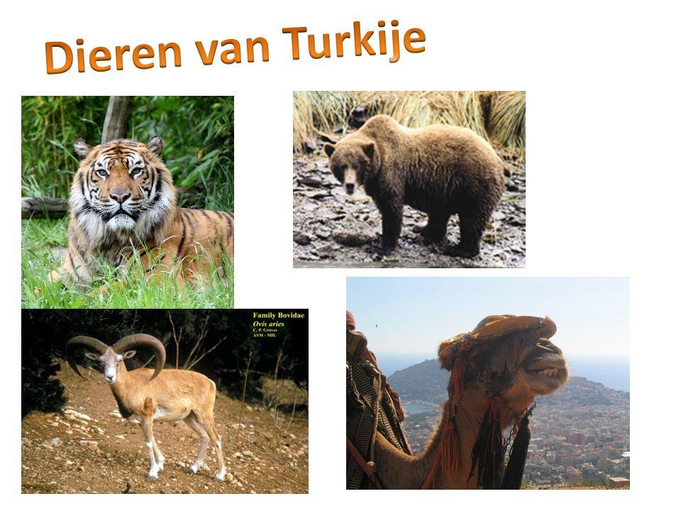 Dieren van Turkije