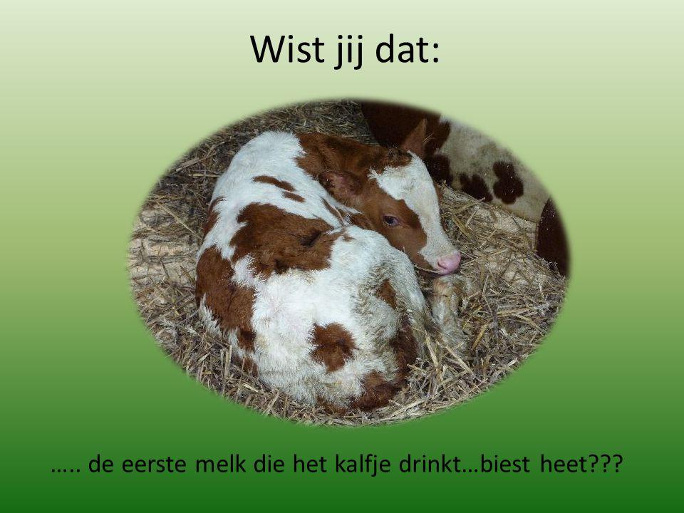 Wist jij dat: ….. de eerste melk die het kalfje drinkt…biest heet