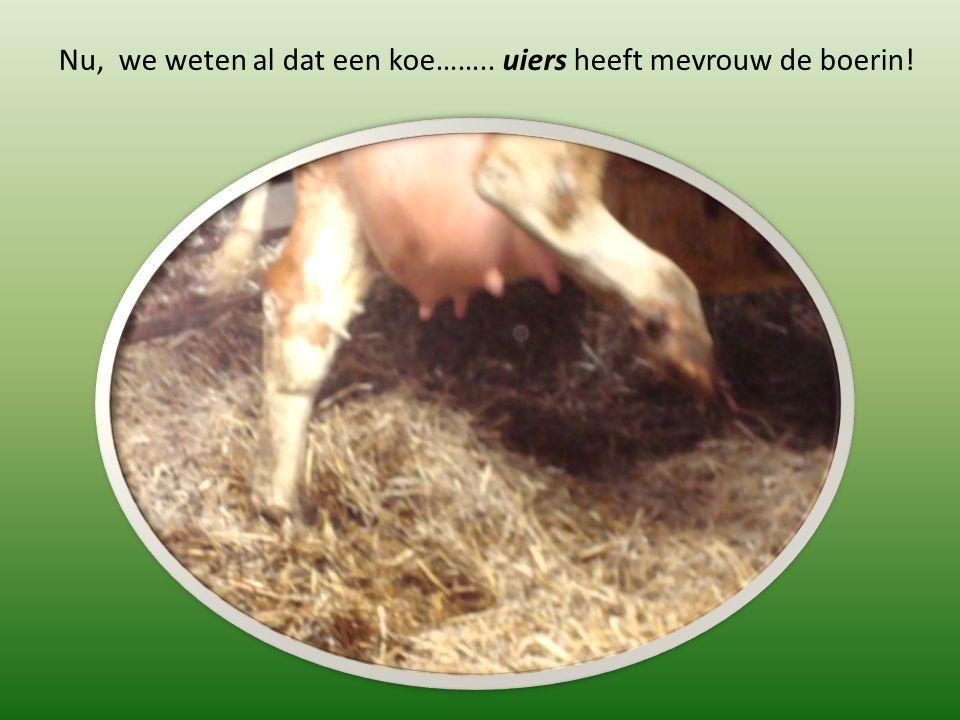 Nu, we weten al dat een koe…….. uiers heeft mevrouw de boerin!