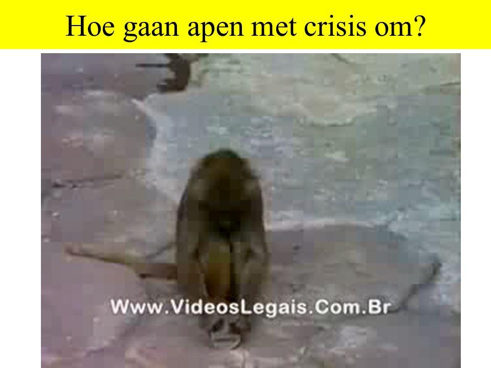 Hoe gaan apen met crisis om