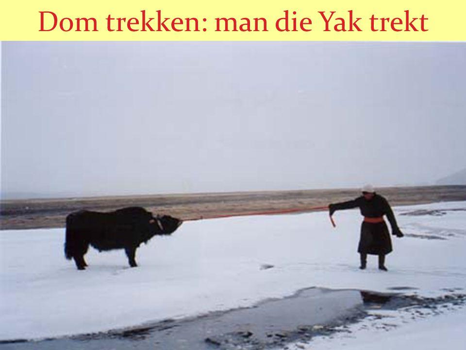 Dom trekken: man die Yak trekt