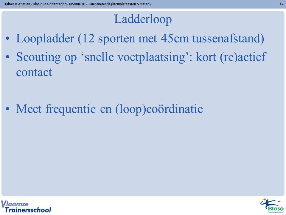 Loopladder (12 sporten met 45cm tussenafstand)