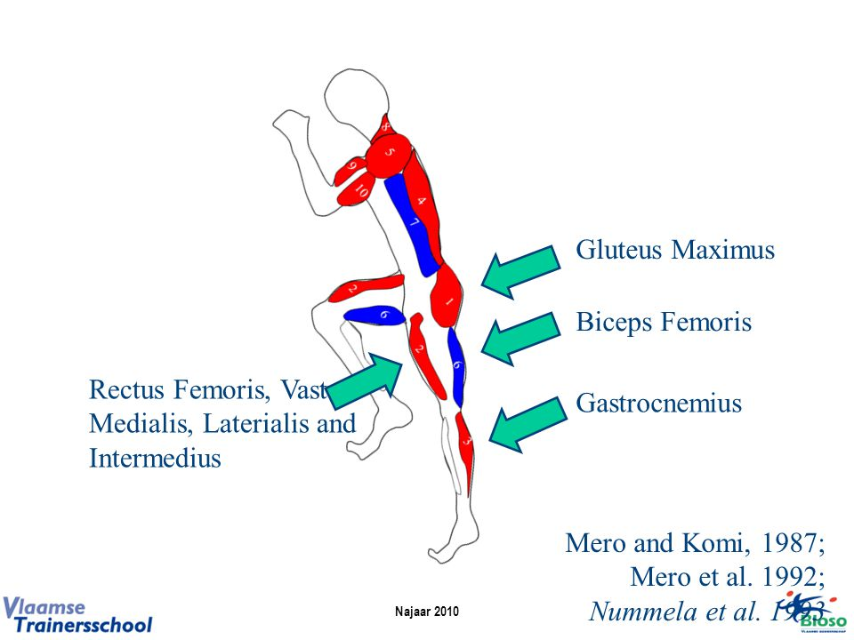 Rectus Femoris, Vastus Medialis, Laterialis and Intermedius