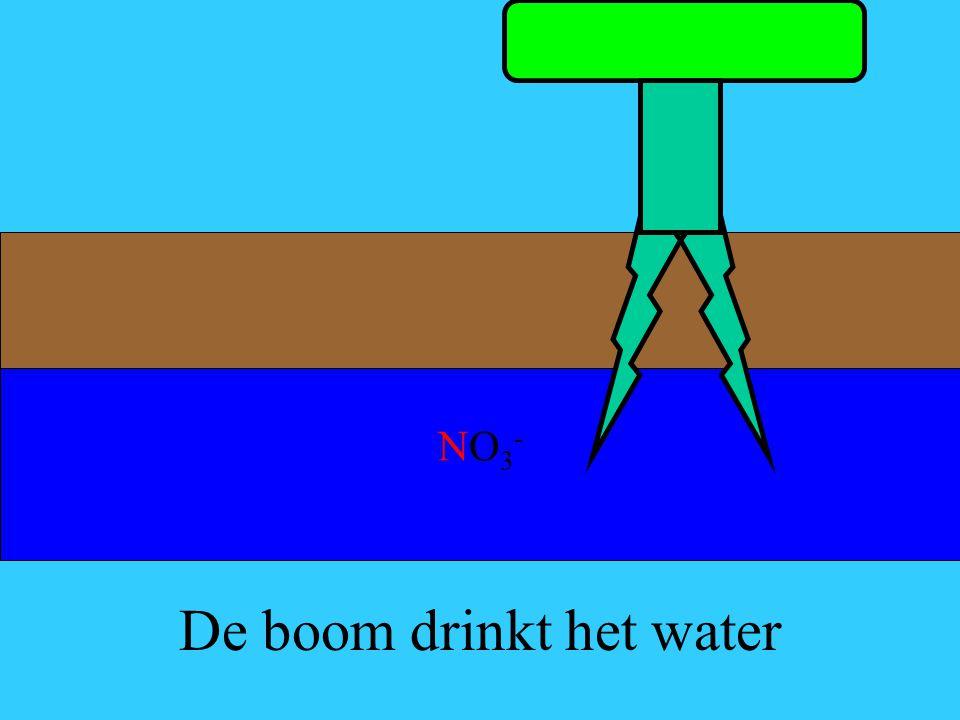 De boom drinkt het water
