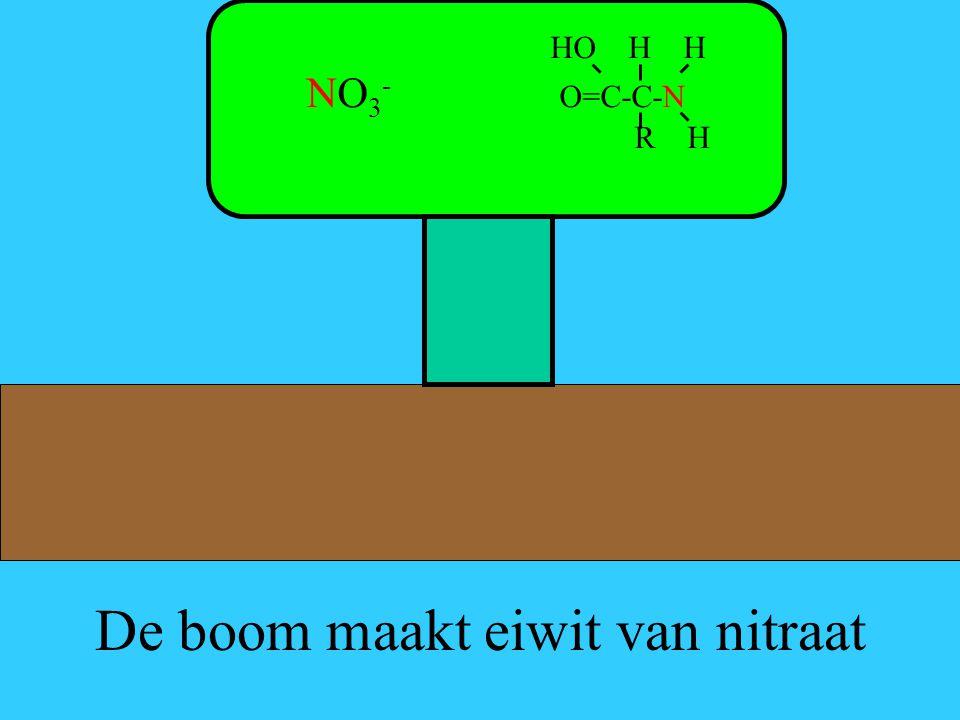 De boom maakt eiwit van nitraat