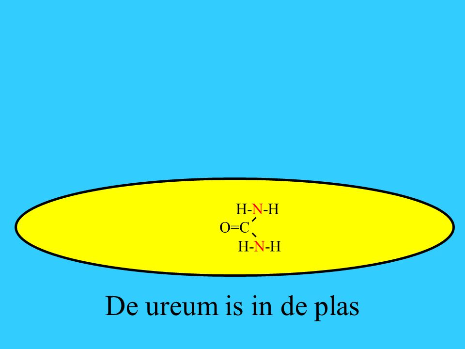H-N-H O=C De ureum is in de plas
