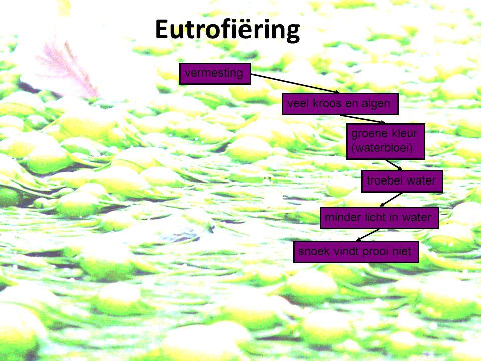 Eutrofiëring vermesting veel kroos en algen groene kleur (waterbloei)