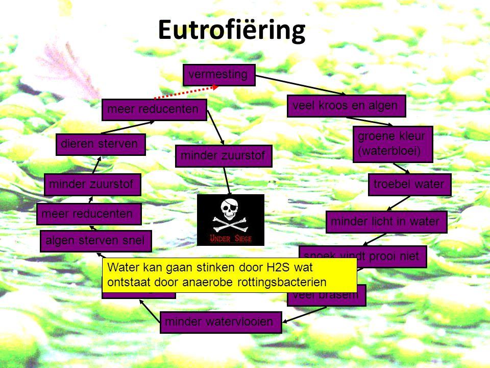 Eutrofiëring vermesting veel kroos en algen meer reducenten