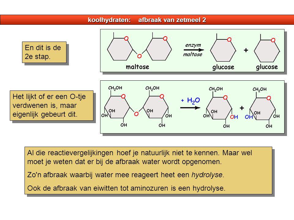 koolhydraten: afbraak van zetmeel 2