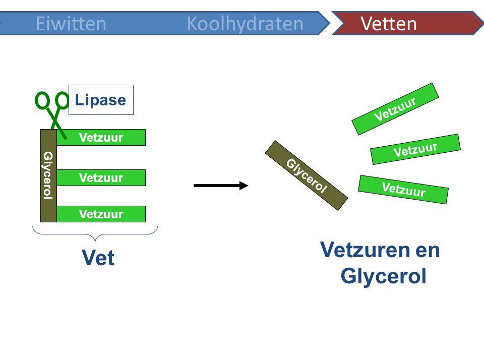 Vetzuren en Glycerol Vet