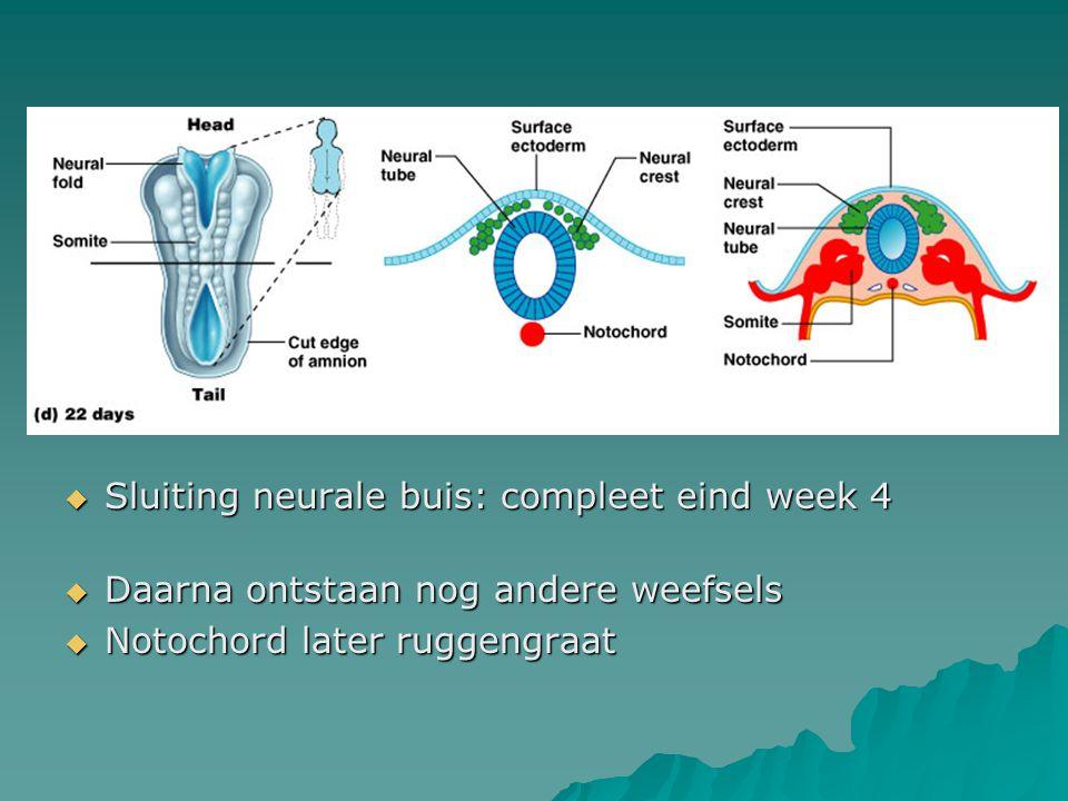 Sluiting neurale buis: compleet eind week 4