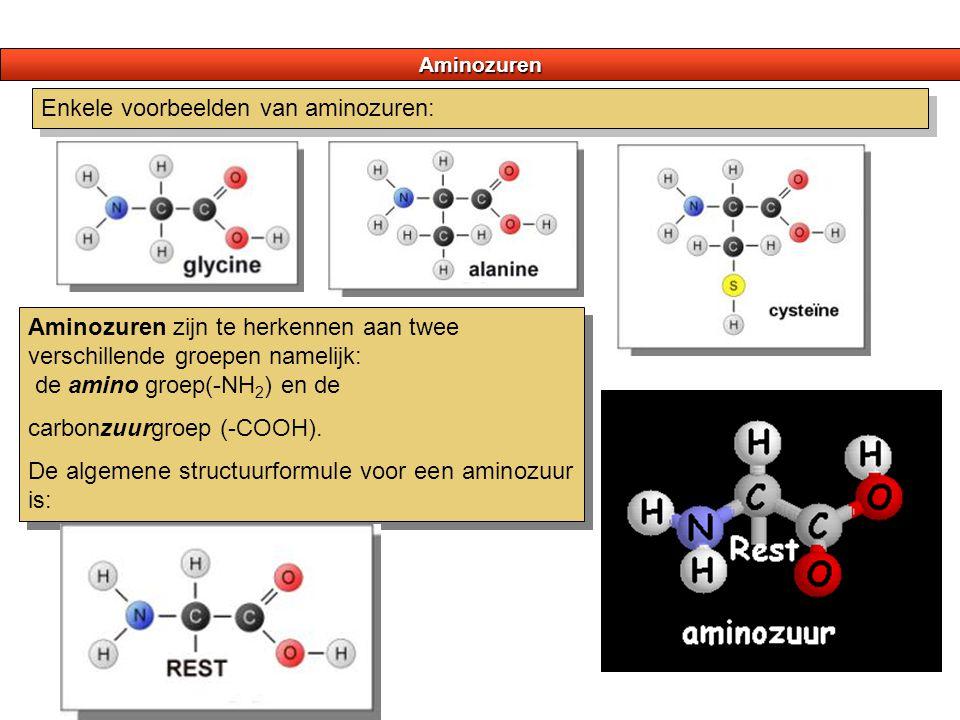 Enkele voorbeelden van aminozuren: