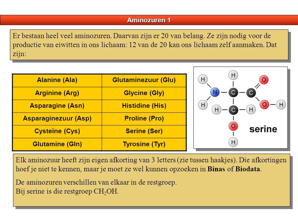 Aminozuren 1