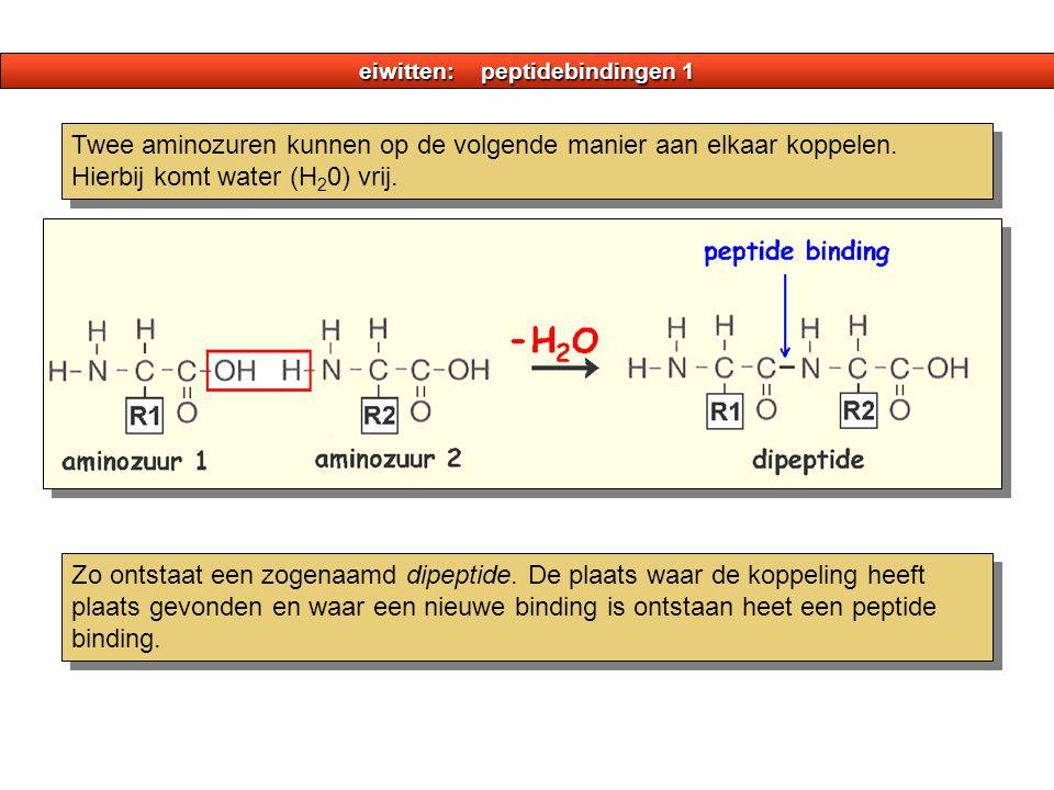 eiwitten: peptidebindingen 1