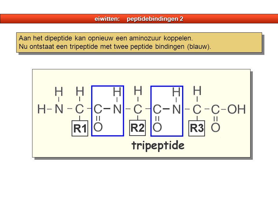 eiwitten: peptidebindingen 2