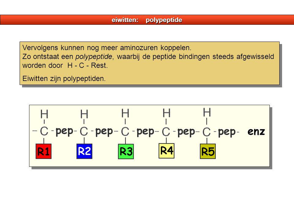 eiwitten: polypeptide
