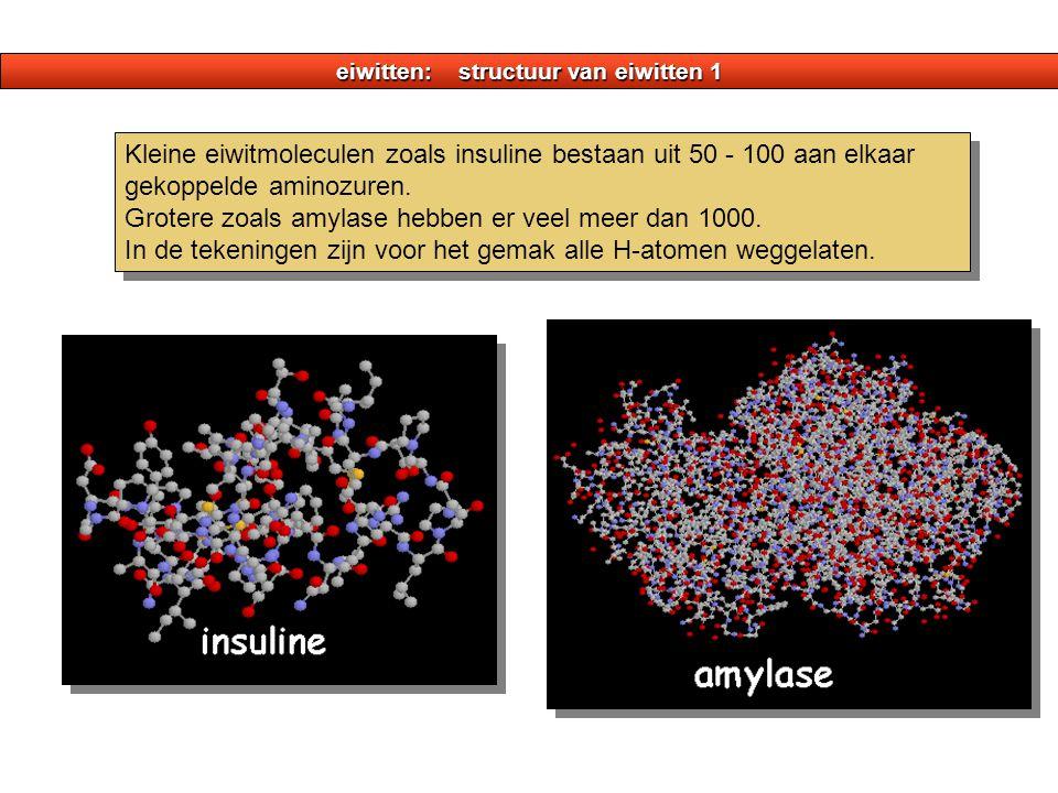 eiwitten: structuur van eiwitten 1