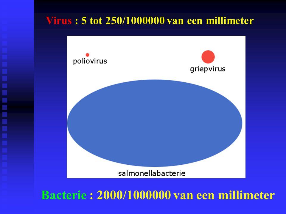 Bacterie : 2000/1000000 van een millimeter