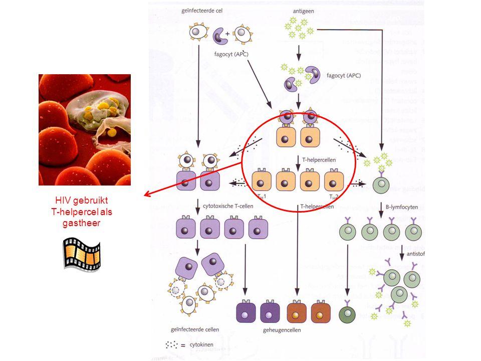 HIV gebruikt T-helpercel als gastheer