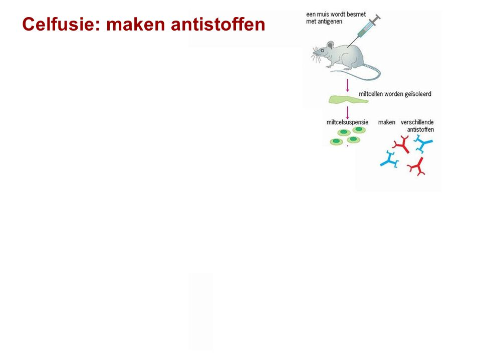 Celfusie: maken antistoffen