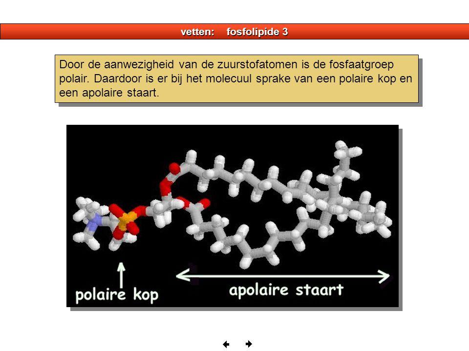 vetten: fosfolipide 3