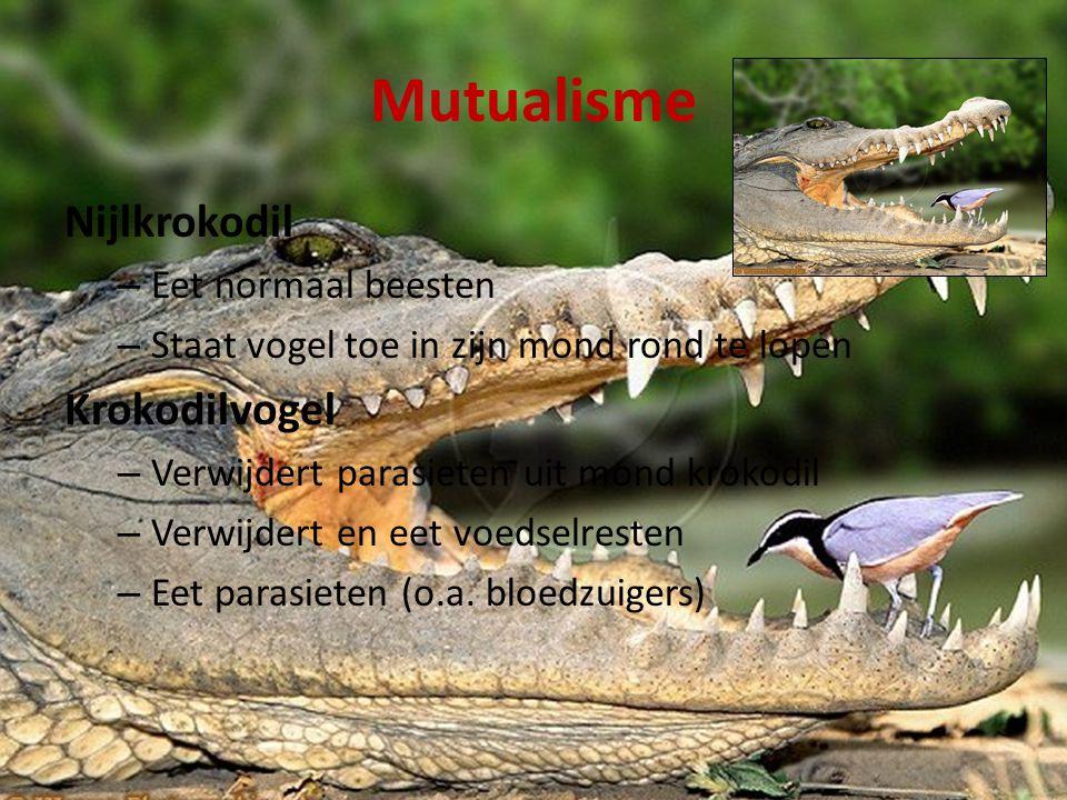 Mutualisme Nijlkrokodil Krokodilvogel Eet normaal beesten