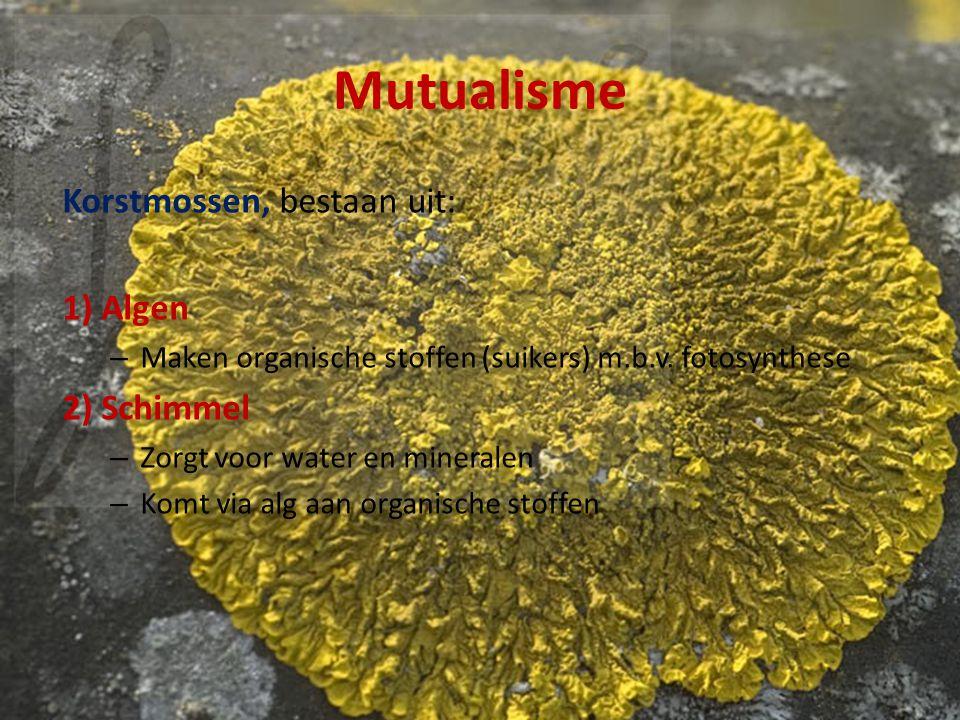 Mutualisme Korstmossen, bestaan uit: 1) Algen 2) Schimmel