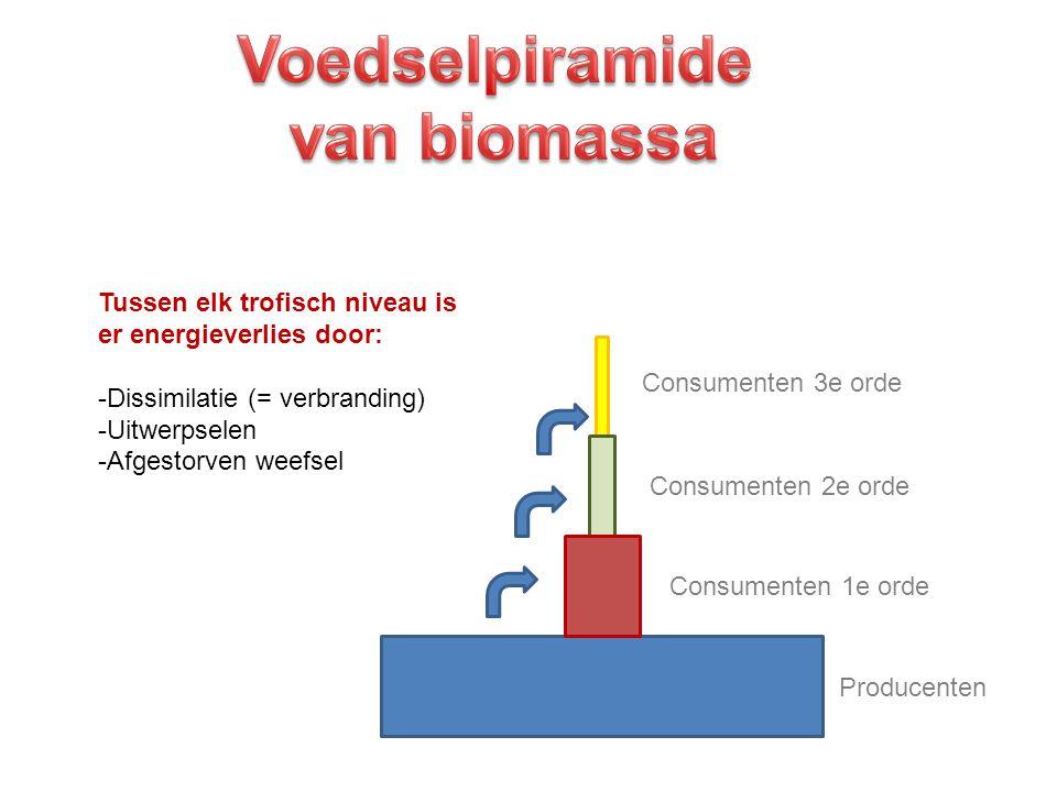 Voedselpiramide van biomassa
