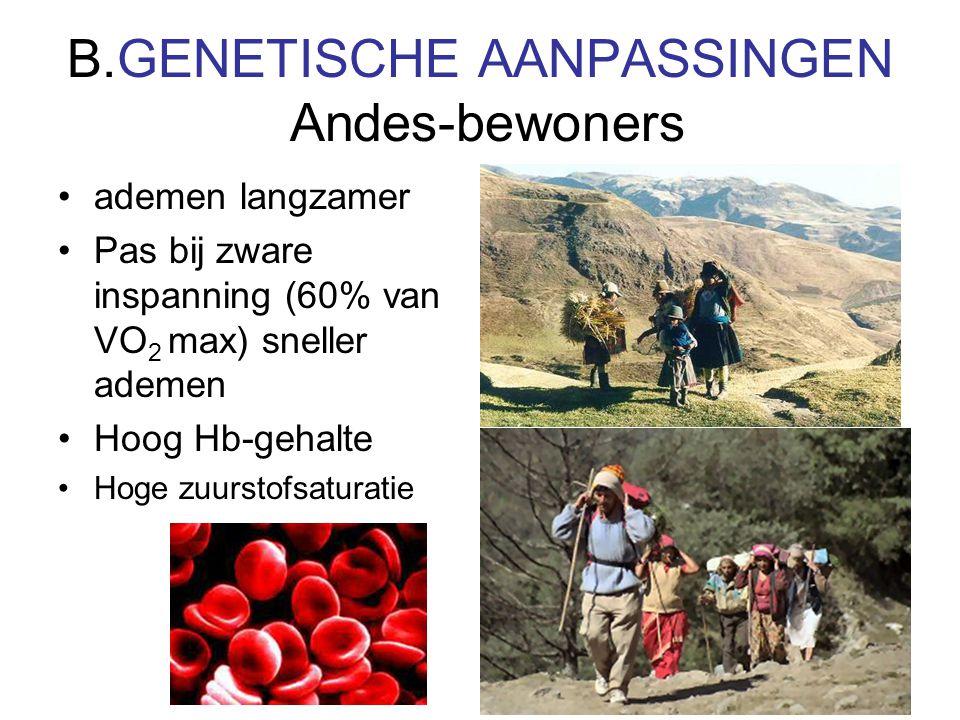 B.GENETISCHE AANPASSINGEN Andes-bewoners