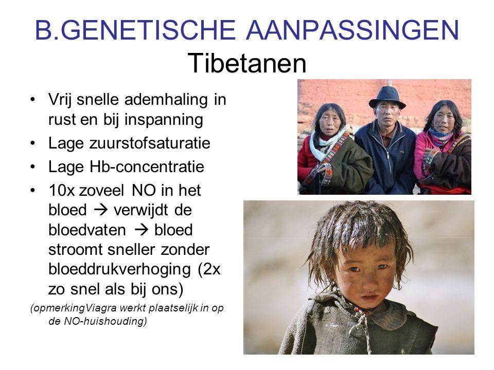 B.GENETISCHE AANPASSINGEN Tibetanen