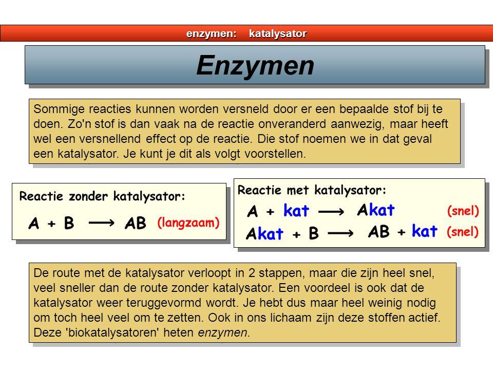enzymen: katalysator Enzymen.