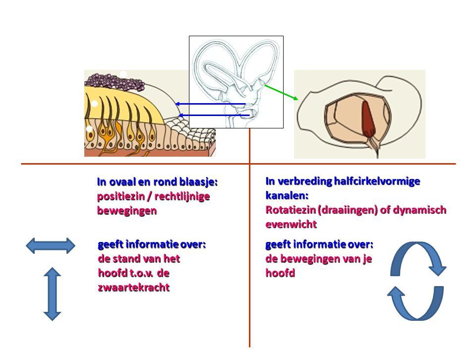 In ovaal en rond blaasje: positiezin / rechtlijnige bewegingen