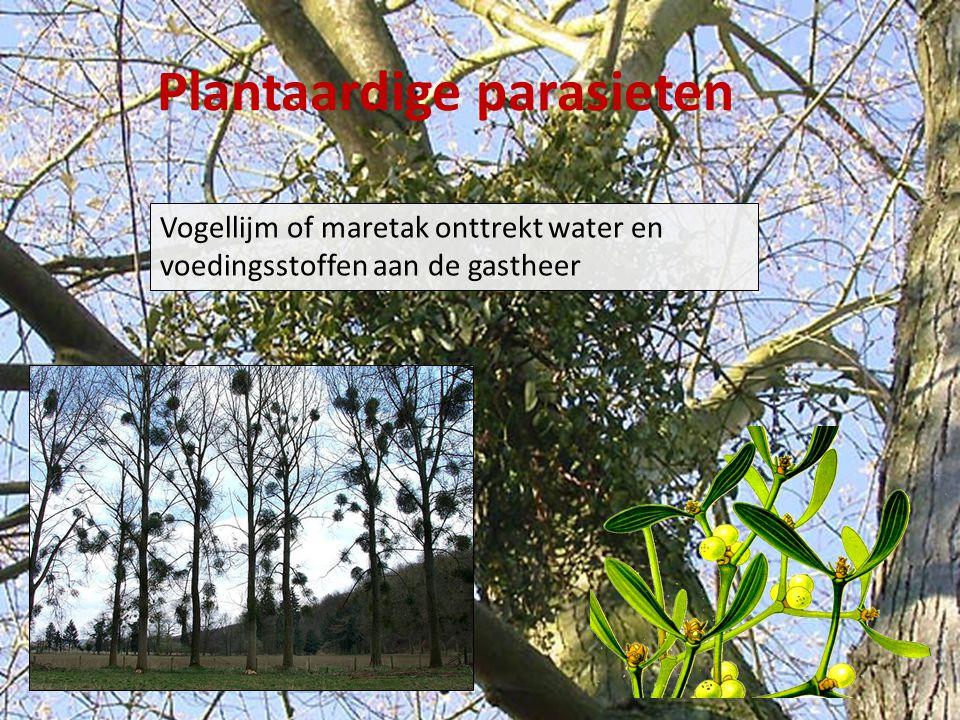 Plantaardige parasieten
