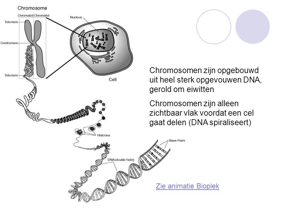 Chromosomen zijn opgebouwd uit heel sterk opgevouwen DNA, gerold om eiwitten