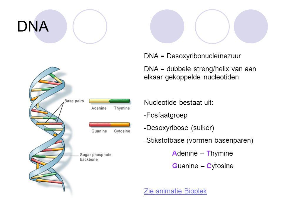 DNA DNA = Desoxyribonucleïnezuur