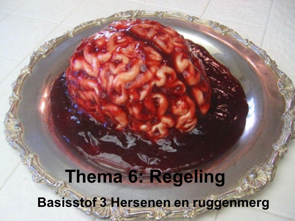 Basisstof 3 Hersenen en ruggenmerg