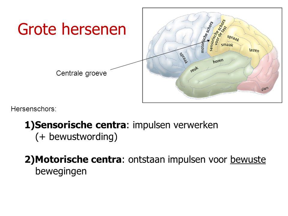 Grote hersenen 1)Sensorische centra: impulsen verwerken