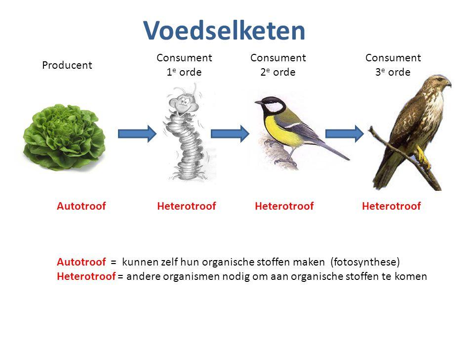 Voedselketen Consument 1e orde Consument 2e orde Consument 3e orde
