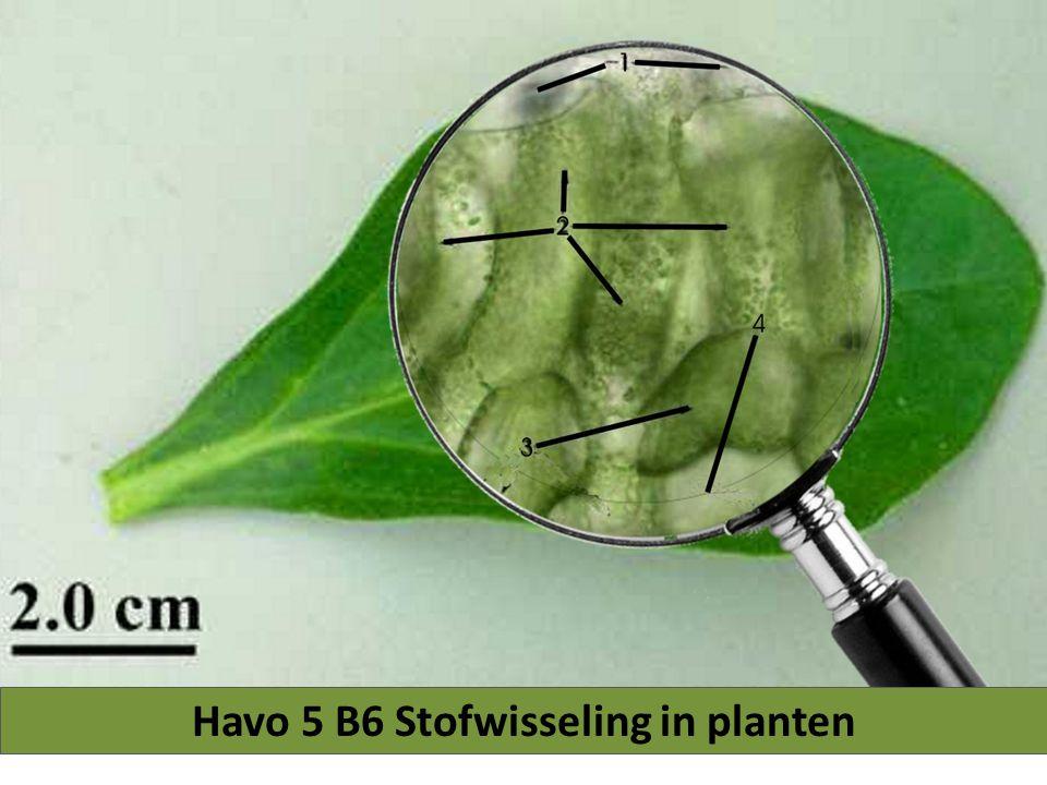 Havo 5 B6 Stofwisseling in planten