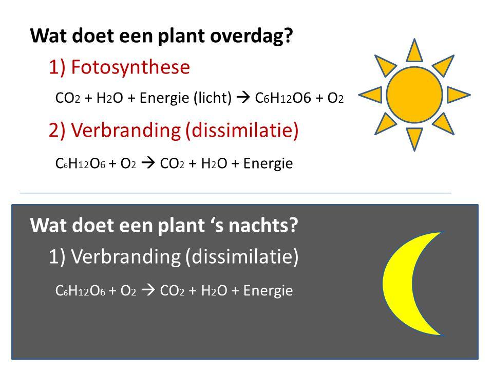 Wat doet een plant overdag 1) Fotosynthese