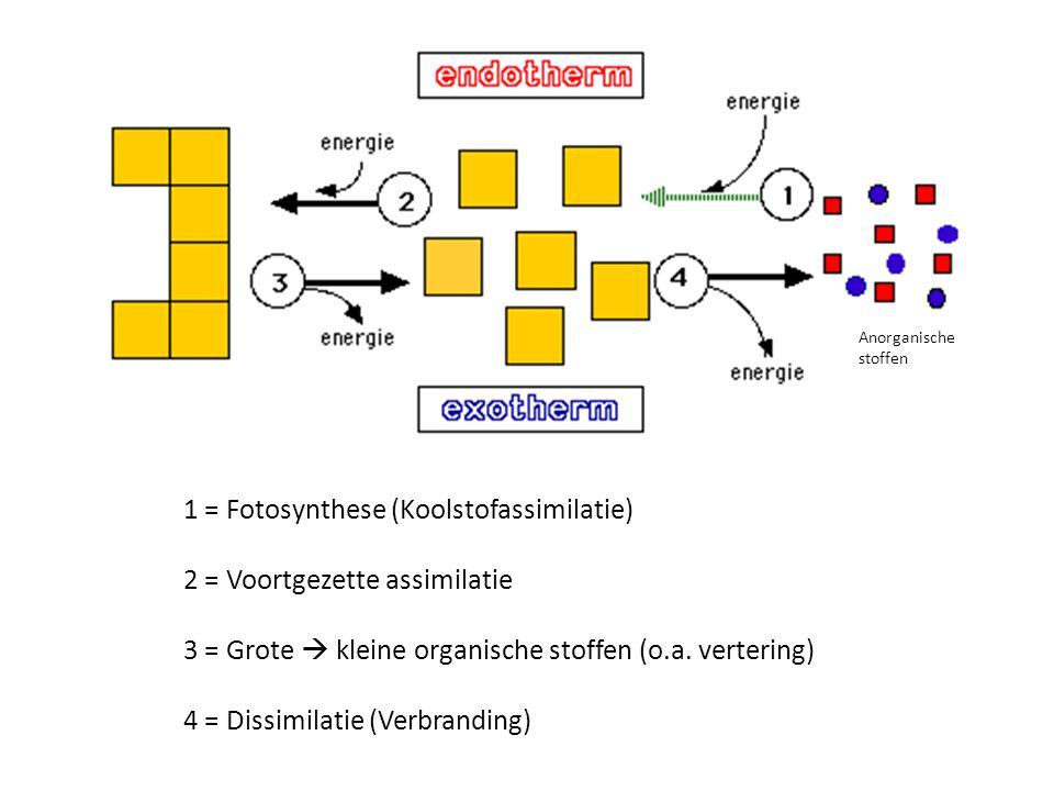 1 = Fotosynthese (Koolstofassimilatie) 2 = Voortgezette assimilatie