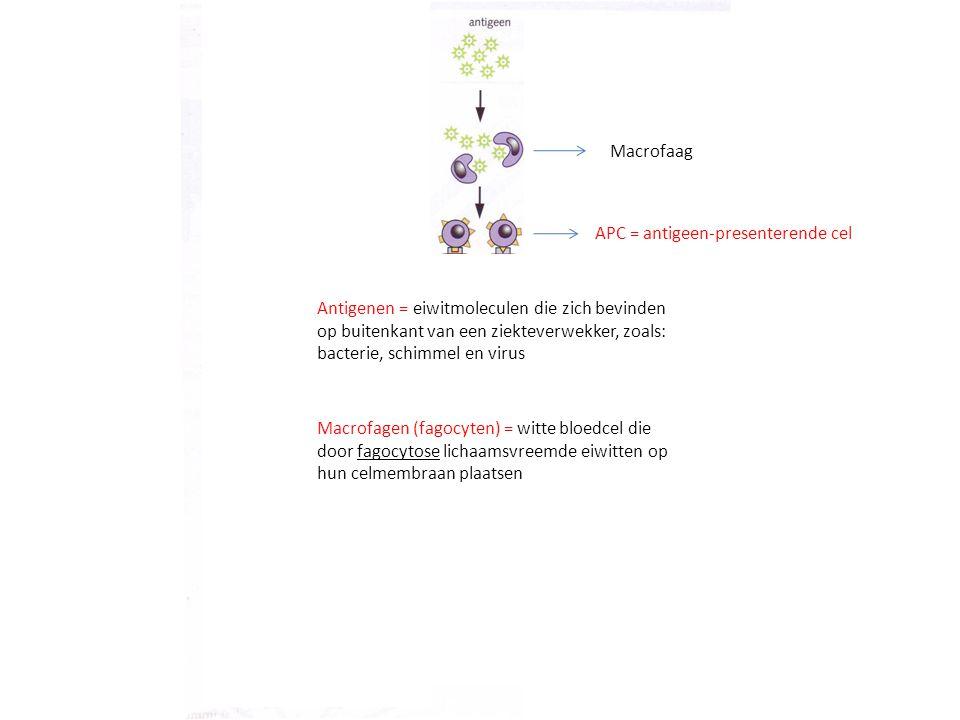 Macrofaag APC = antigeen-presenterende cel.
