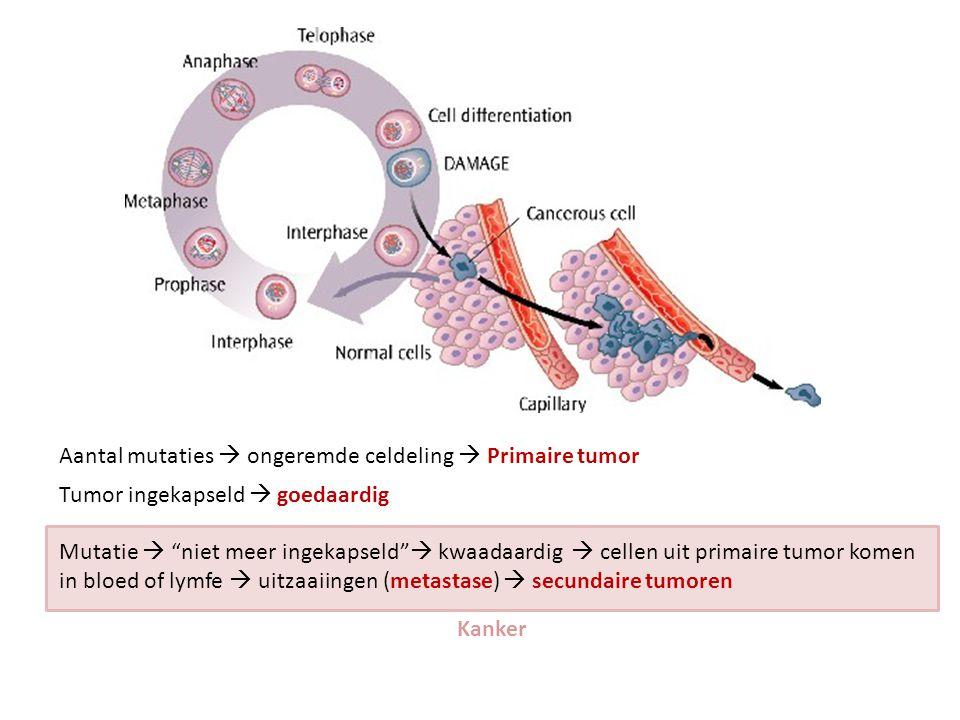 Aantal mutaties  ongeremde celdeling  Primaire tumor